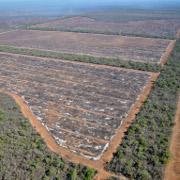 Luftaufnahme von illegaler Brandrodung in Argentinien. Die so gerodeten Flächen werden meist für den industriellen Anbau von Soja, Zuckerrohr oder Färberdistel genutzt. Foto: Brot für die Welt
