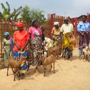 Beim Ziegenkauf für bedürftige Witwen.
