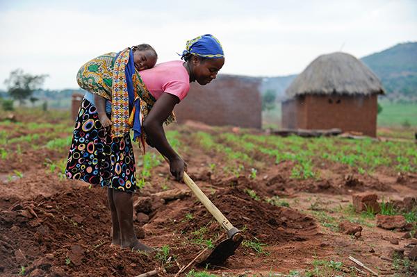 Bäuerin bei der Feldarbeit in der Provinz Kwanza-Sul in Angola. Foto: Jörg Böthling / Brot für die Welt