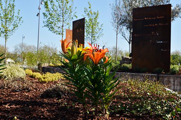 Feuerlilien, Lavendel und andere Pflanzen aus biblischen Zeiten sind den Hochbeeten gepflanzt.