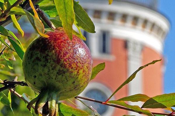 Pflanzen und Bäume spielen in der Bibel im Alltag und als Symbole eine große Rolle.