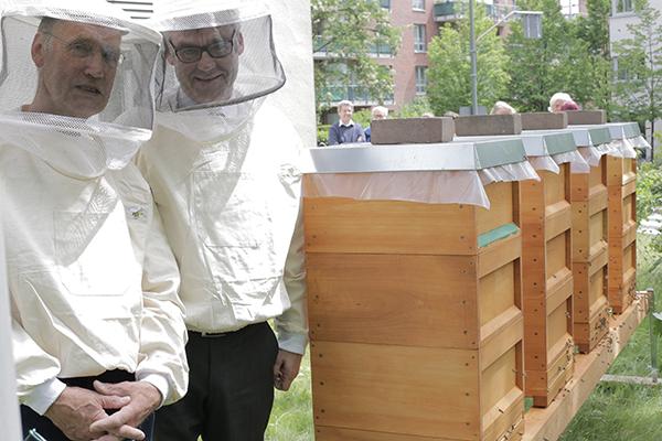 Imker Hans Spiekermann (l.) und Vizepräsident Dr. Johann Weusmann stellen die vier Bienenvölker vor, die an diesem Tag im Vorgarten des Düsseldorfer Landeskirchenamts angesiedelt wurden.