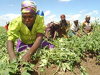 In vielen Ländern des Südens sorgen vor allem die Frauen dafür, dass die Familie etwas zu Essen hat: Malawi.